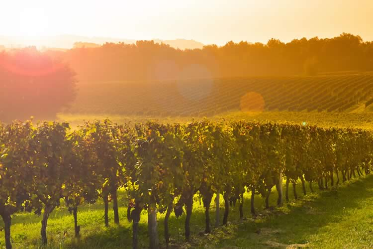 An Evening in Bordeaux _ Wine Dinner